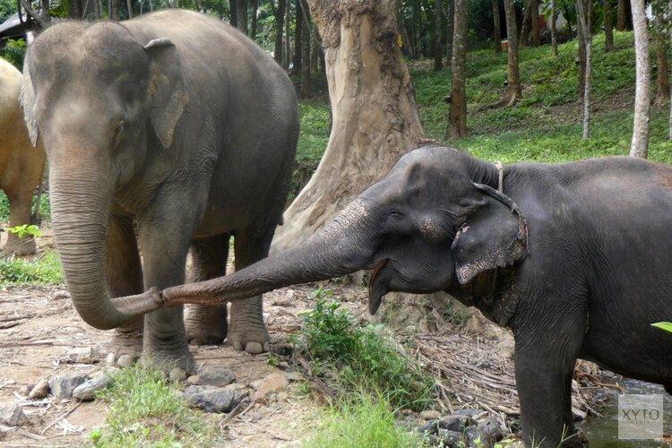 Olifantvriendelijke opvang Following Giants geopend