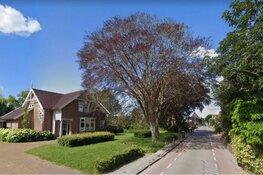 Na 120 jaar is de beroemde beuk van Berkhout geveld